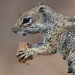 squirrel-895309_6401
